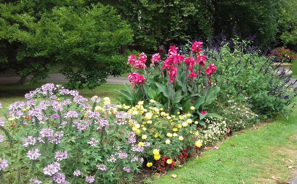 tavasz otthon kert